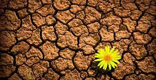 ¿Cómo desarrollar la resiliencia en tiempos de COVID-19?